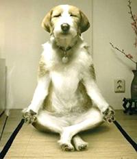 Début de l'atelier hebdomadaire de Yoga avec Christine Bertrand Garnatz